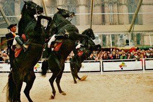 Espectaculo caballos